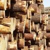☂ Koksnes cena ilgtermiņa līgumplatībās
