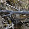 Aizsargāts: Upju un ezeru aizsargjoslās pastāv ierobežojumi