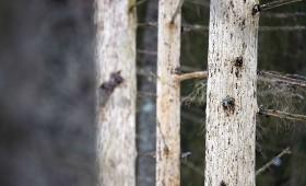 Meža īpašnieki var pieteikties NATURA 2000 maksājumiem