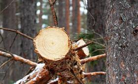 Mežpārkāpumi par 1,72 milj.EUR