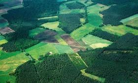 Plānotais atbalsts meža īpašniekiem jaunajā plānošanas periodā