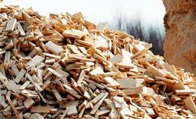Izstrādāti biomasas aprēķina vienādojumi četrām koku sugām