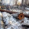 Aizsargāts: Nelikumīga meža izciršana joprojām ir liela problēma