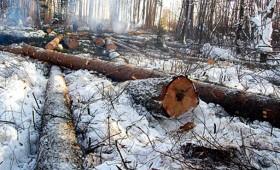 ☂ Nelikumīga meža izciršana joprojām ir liela problēma