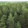 Nākamgad kadastrālo vērtību meža zemei nepaaugstinās