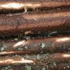 Meža atjaunošanas vidējās izmaksas: 566–630 Eur/ha; mežizstrādes: 17– 21 Eur/m3