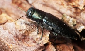 DAP aicina kopt dabas daudzveidību gudri un zinātniski pamatoti