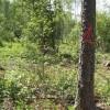 Mežsaimnieku apvienība iegūst PEFC grupas sertifikāciju