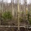 Aizsargāts: ES finansējums šodien, vai peļņa no izaudzētās mežaudzes nākotnē?