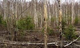☂ ES finansējums šodien, vai peļņa no izaudzētās mežaudzes nākotnē?