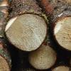 Baltkrievija grasās pārtraukt apaļkoku eksportu