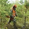 Atjauno atbalsta programmu jaunaudžu kopšanai un mazvērtīgo mežaudžu nomaiņai