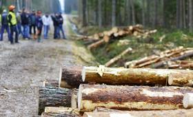 ☂ Kas kavē meža īpašnieku apvienošanos kooperatīvos?