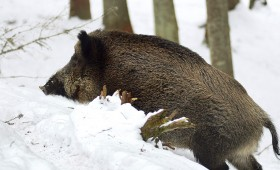☂ Kā slēgt medību tiesību nomas līgumu?