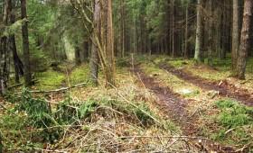 Nelikumīga koksnes ieguve turpinās