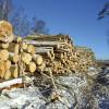 Aizsargāts: Pārskats par koku ciršanu mežā jāiesniedz līdz 1. februārim