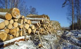 ☂ Pārskats par koku ciršanu mežā jāiesniedz līdz 1. februārim