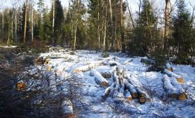 Siltie laikapstākļi ietekmē mežizstrādes darbu apjomu