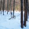 Aizsargāts: Kādu koku stādīsim?