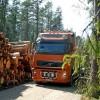 Meža nozare atbalsta kokvedēju automobiļu vadītāju profesijas apguvi Latvijā