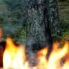 Mežs degas arī ziemā