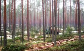 Kā kopj boreālos mežus