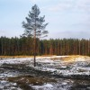 Aizsargāts: Koku ciršanas kārtība ārpus meža