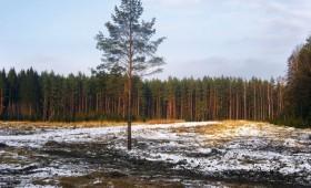 Ieviesīs administratīvo atbildību par zemes neizmantošanu