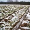 Aizsargāts: Meža ieaudzēšana lauksaimniecības zemē – ar ko sākt?