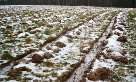 ☂ Meža ieaudzēšana lauksaimniecības zemē – ar ko sākt?