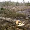☂ Mežu izlaupīšana turpinās