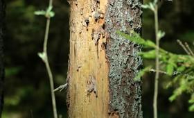 Natura 2000 ieviešana radījusi meža īpašnieku uzticības trūkumu