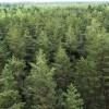 Iecerēts precizēt valsts meža zemes atsavināšanas nosacījumus
