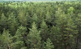 Jaunās ES regulas veicinās siltumnīcu gāzu piesaisti