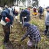 ☂ Kas jāņem vērā, stādot mežu