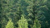 Klimats mainās, bet mežs paliek