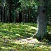Dabiskos Rāznas Nacionālā parka mežus