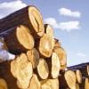 Pieprasījums pēc Krievijas koksnes Eiropā samazinās
