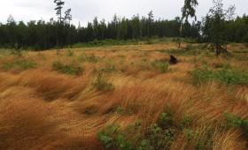 ☂ AS «Latvijas valsts meži» aktīvi iesaistās meža zemju tirgū