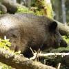 Nosaka ierobežojumus medību rīkošanā