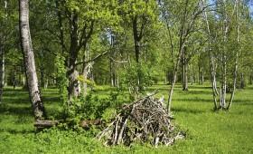 ☂ Mežs dod patvērumu pļavām un ganībām