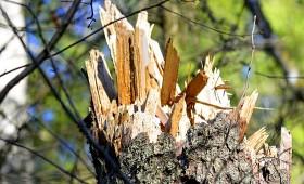 Vētra izgāž 10 tūkst. m3 koksnes