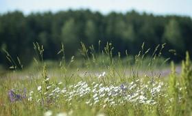 ☂ Meklēs ES nozīmes biotopus