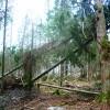 ES atbalsta mežiem 2. kārtas rezultāti