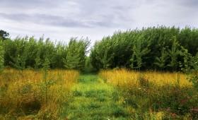 Pabeigts pētījums par veģetatīvi pavairojamo ātraudzīgo koku sugu klonu identifikāciju