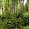 Aicina meža īpašniekus pieteikties atbalstam