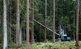 Kāds būs koku ciršanas maksimāli pieļaujamais apjoms 2016.–2020. gadam?
