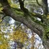 Iespējams pieteikties kompensācijām par NATURA 2000 meža teritorijām