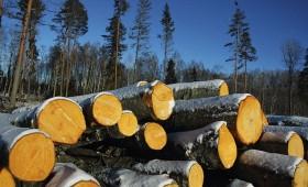 ☂ Apstiprināta ciršanas tāme valsts mežos 2016.–2020. gadam