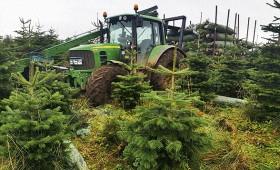 Skotijā modernizē svētku eglīšu audzētavu